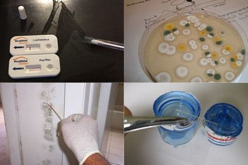 Mold Testing Methods