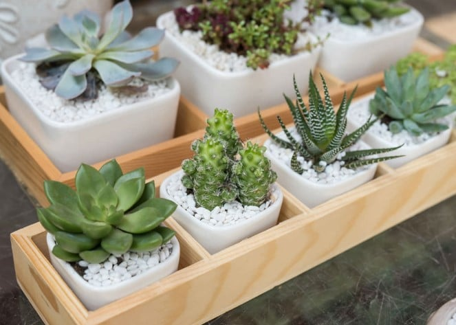 How to Take Care of Succulents Indoors?