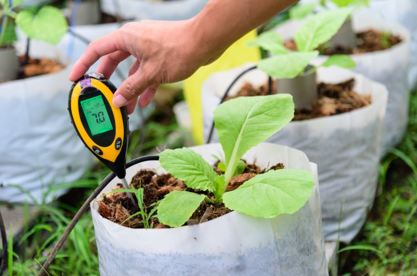 Check pH value in Planting bag