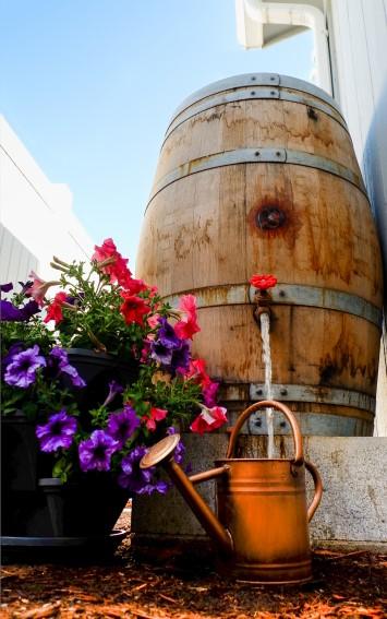 Rain barrel and watering can