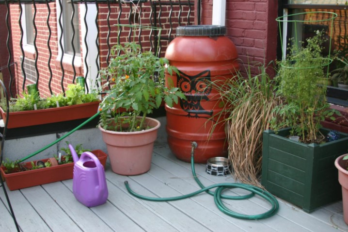 How to use water from rain barrels: Tips + Ideas