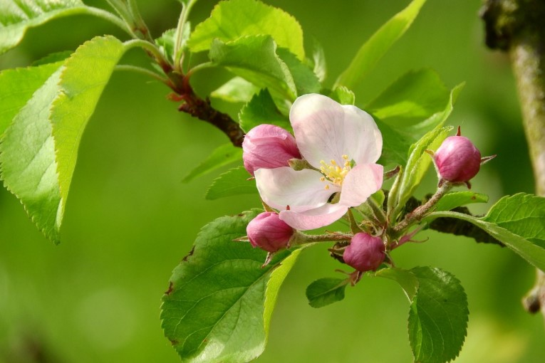 When Is the Best Time to Fertilize Fruit Trees?