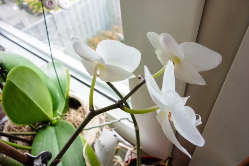 The best potting mix for orchids