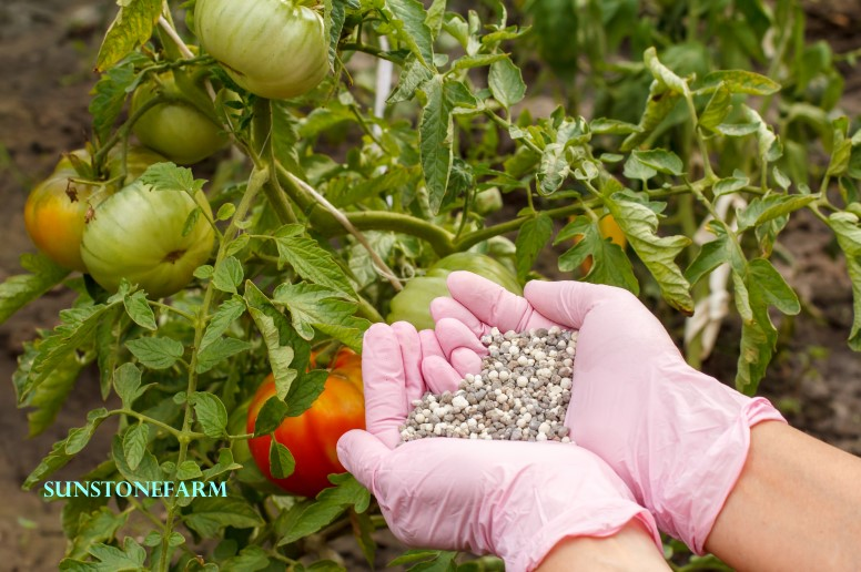 Chemical fertilizer for tomato bushes in the garden