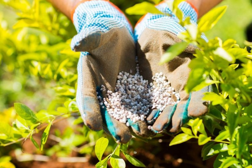 Is It Possible to Fertilize Fruit Trees Too Much?