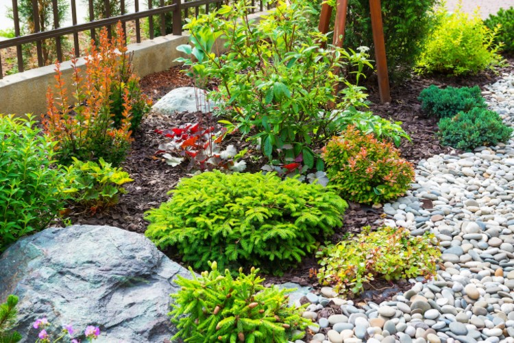 Flower bed with rocks