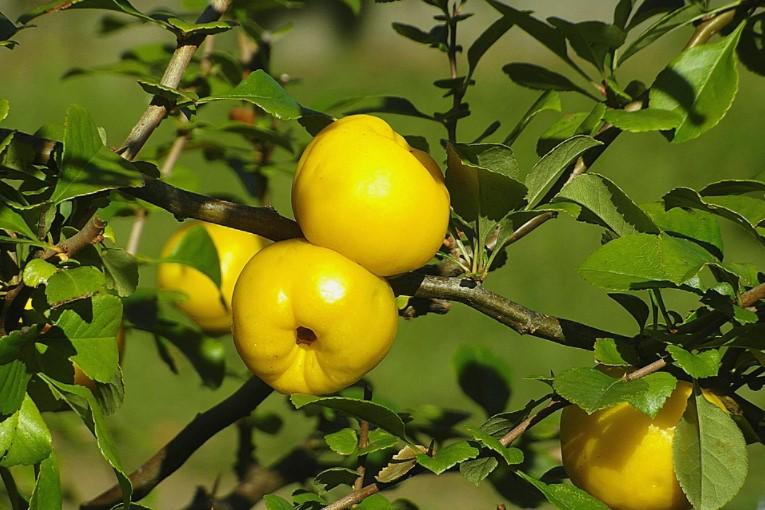 poland lemon in fall