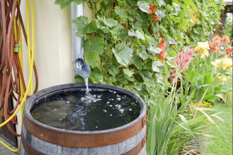 Best rain barrels for watering your yard and garden