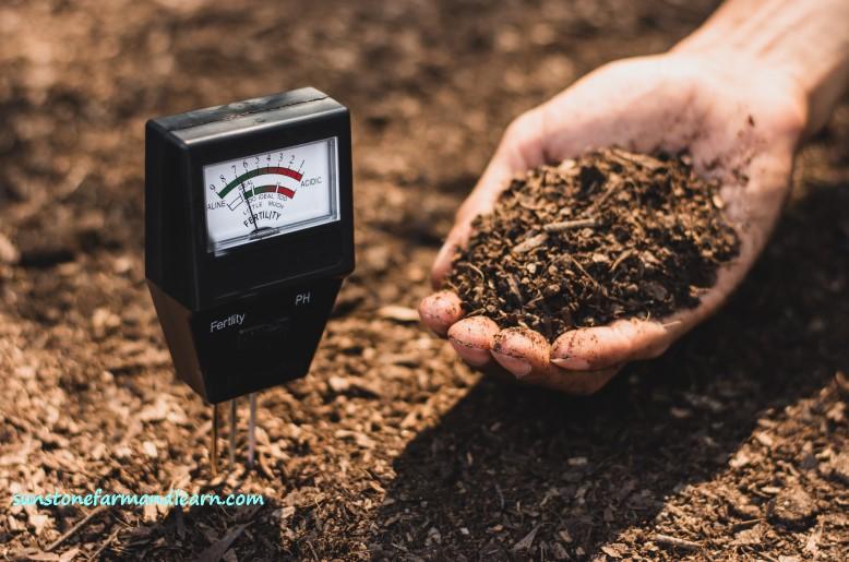Vegetable garden soil test
