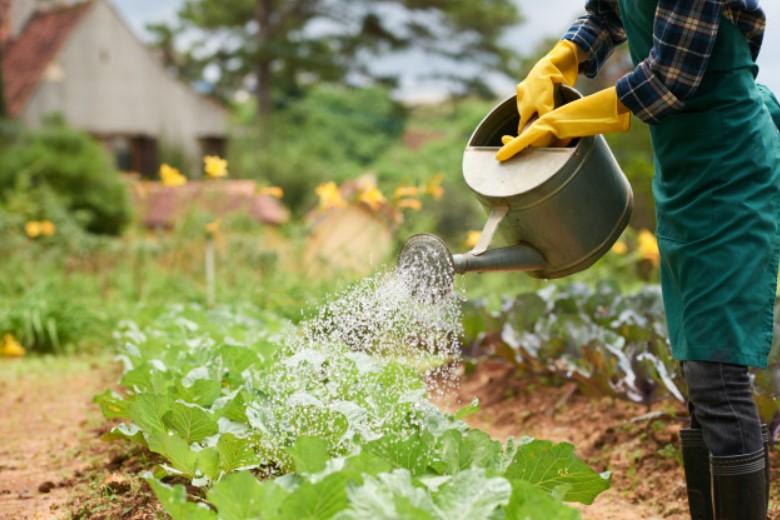 How often to water vegetable garden in summer?