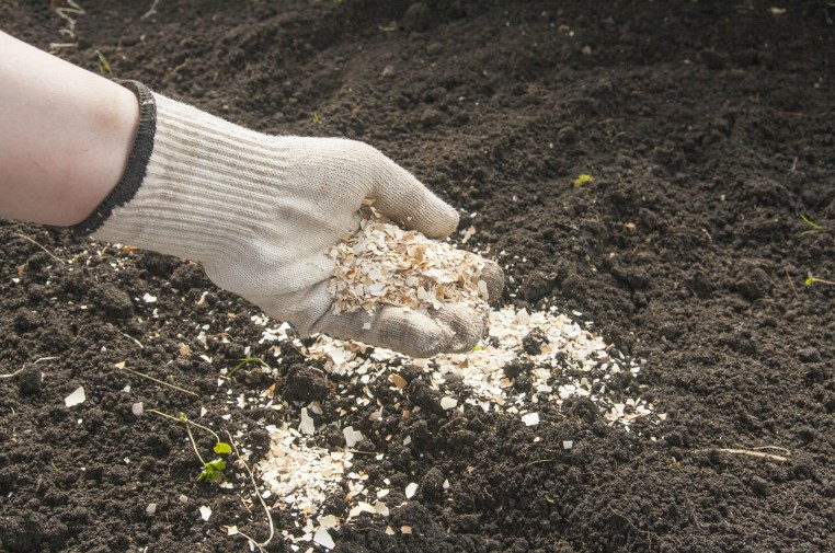 Fertilizing the soil with eggshells