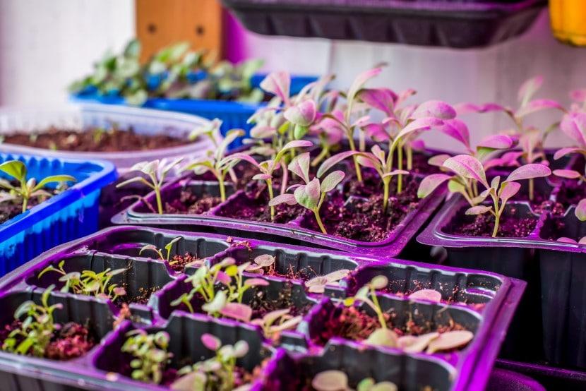 Seedlings under mixed lighting