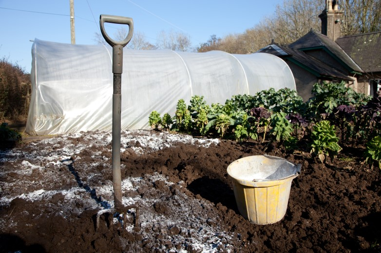 When to Apply Lime to the Soil of Your Vegetable Garden