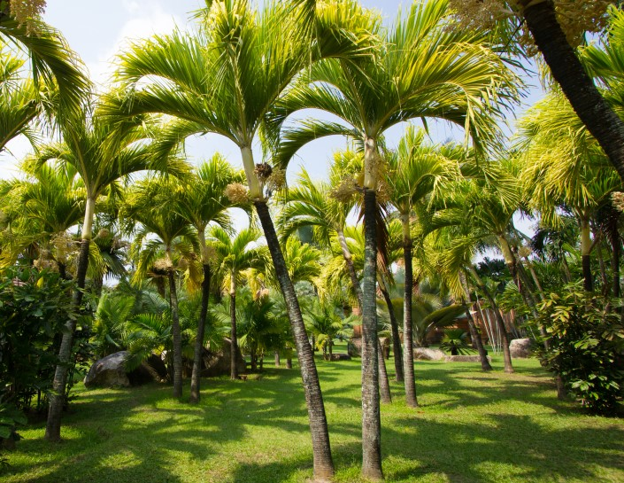The best fertilizer for palm trees