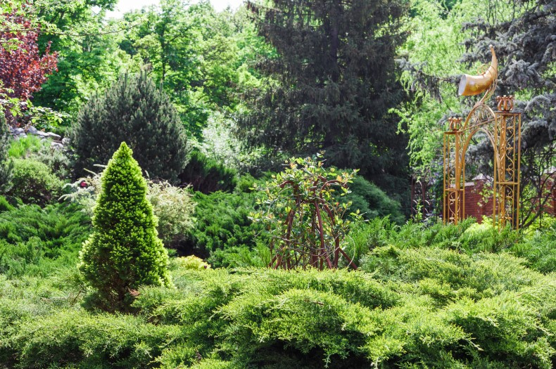 The best fertilizer for trees and shrubs