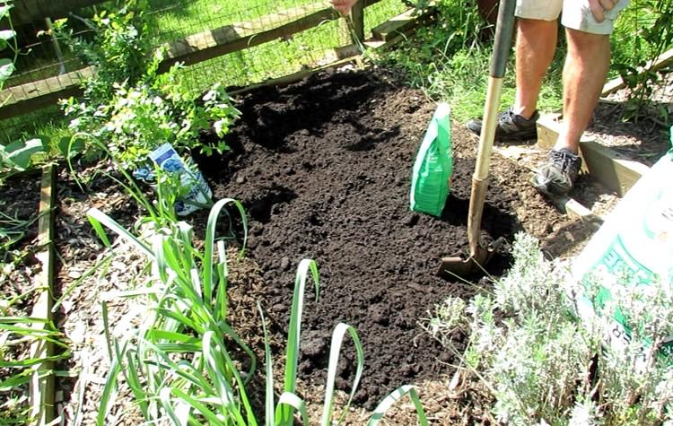 Soil preparation for blueberry plant