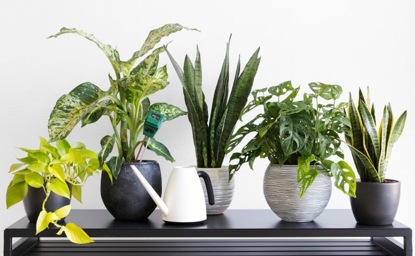 The best fertilizer for indoor plants growth