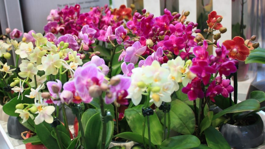 The best orchid fertilizer for blooms and growth