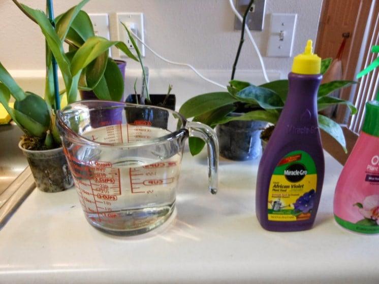 How to fertilize orchids