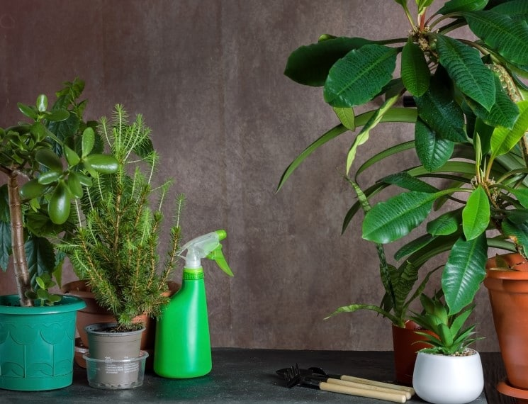 Do You Really Need to Fertilize Your Indoor Plant?