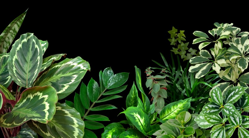 When to Fertilize Indoor Plants: Best Time to Add Fertilizer to Indoor Plants