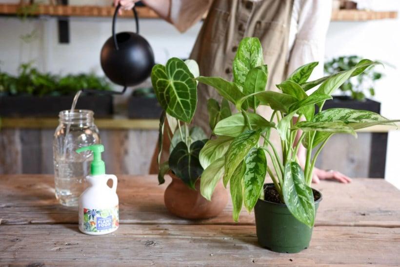 How to use liquid fertilizer for indoor plants?