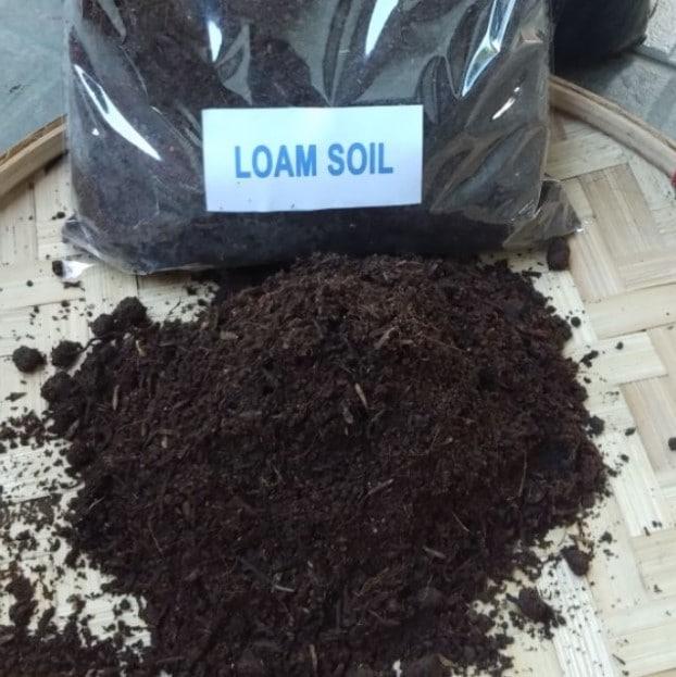 Loam soil is best for hydrangeas